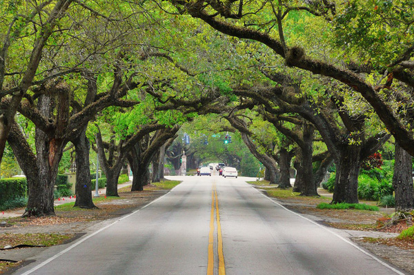 Coral Gables Trees