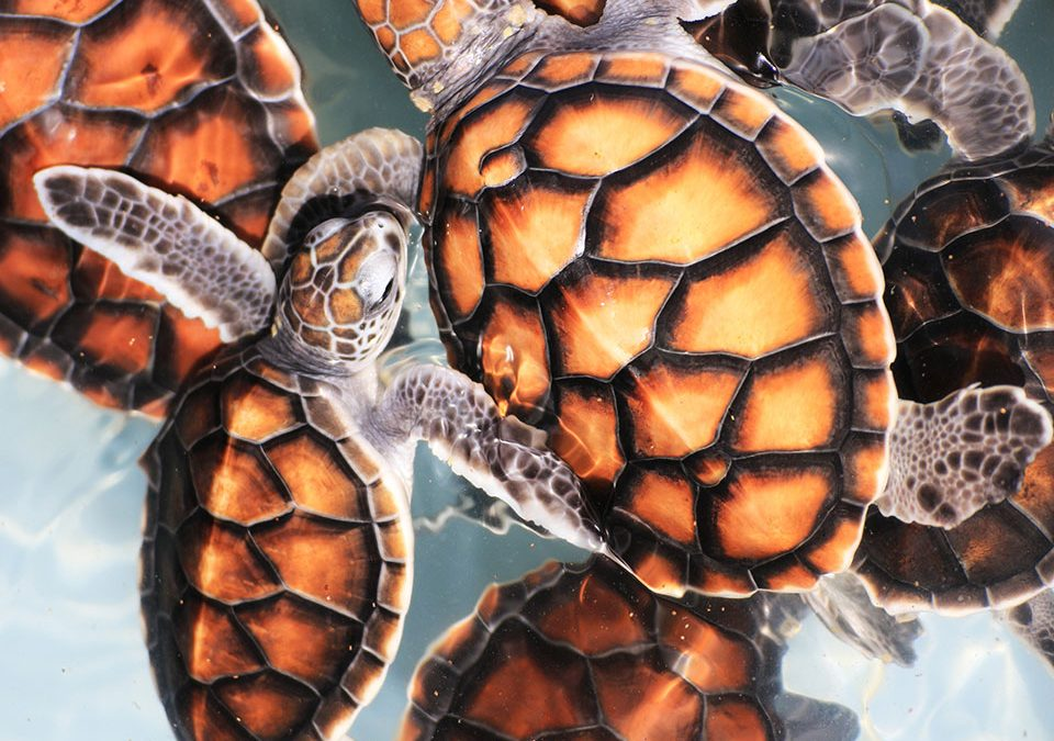 Turtle Baby Boom